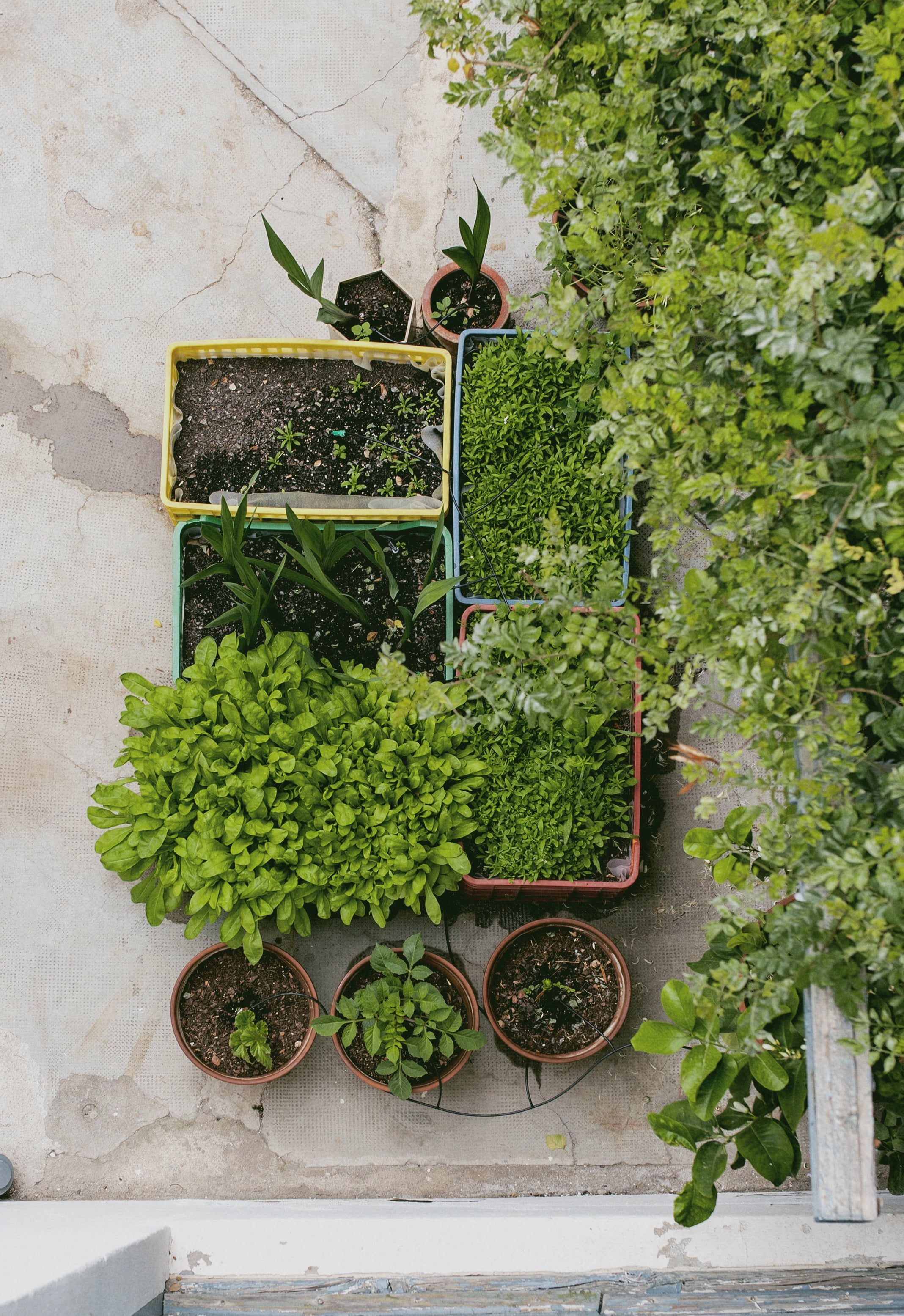 BOBO CHOSES TO MAKE A GARDEN LIVE