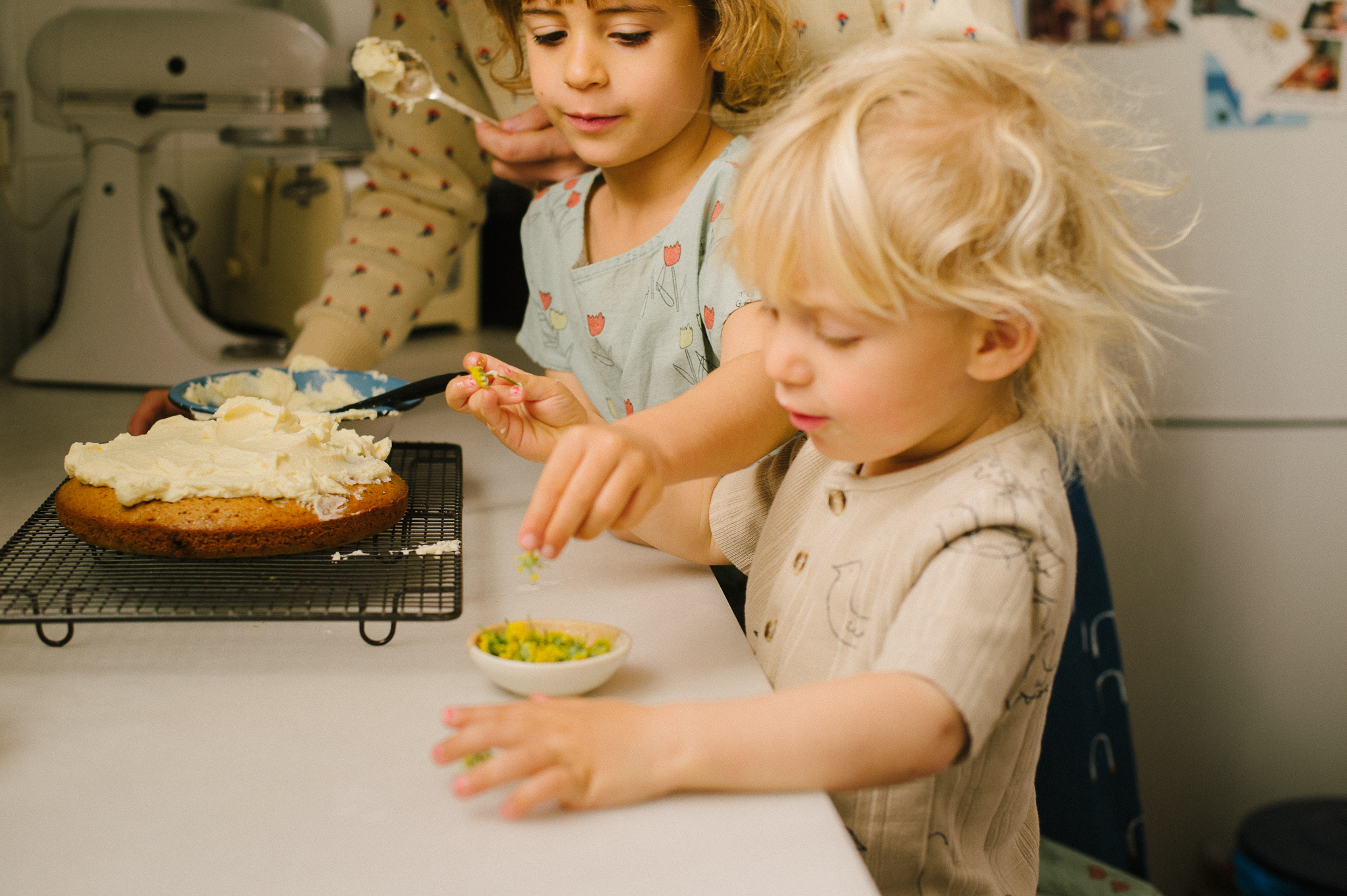BOBO CHOSES THE HAPPYSADS RECIPE